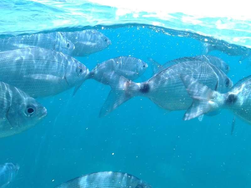 Fodo de Les Illes Medes amb catamarà
